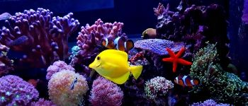 Aquarium Design and Installation
