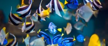 Aquarium Repairs, Servicing and Maintenance